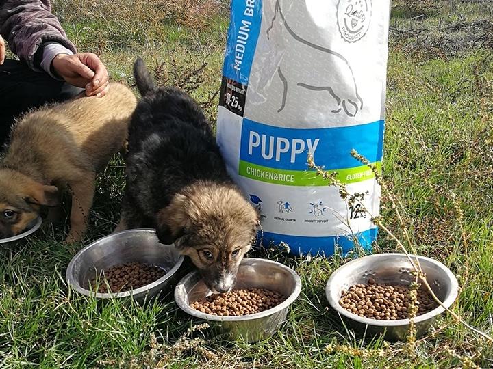 Engel der Hunde e.V.-Futterspendenankunft-november 2019-Aktion SOS Hilferuf Rumänien-Rumänien (3)