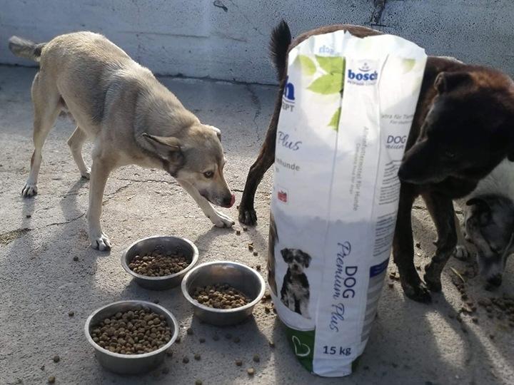 Engel der Hunde e.V.-Futterspendenankunft-november 2019-Aktion SOS Hilferuf Rumänien-Rumänien (4)