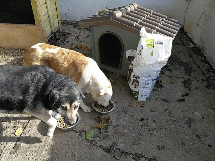Engel der Hunde e.V.-Futterspendenankunft-november 2019-Aktion SOS Hilferuf Rumänien-Rumänien (5)