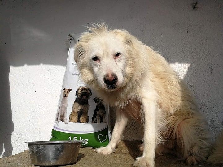 Engel der Hunde e.V.-Futterspendenankunft-november 2019-Aktion SOS Hilferuf Rumänien-Rumänien (6)