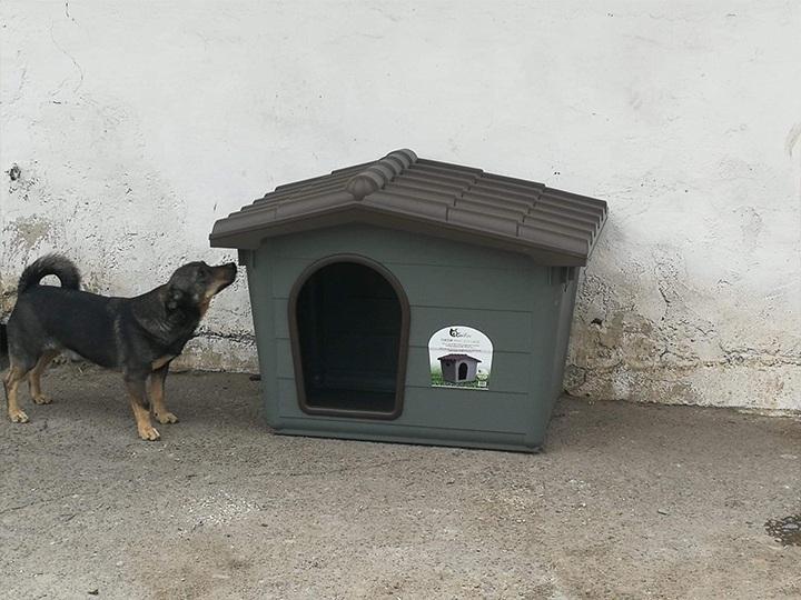 Engel der Hunde e.V.-Futterspendenankunft-november 2019-Aktion SOS Hilferuf Rumänien-Rumänien (8)