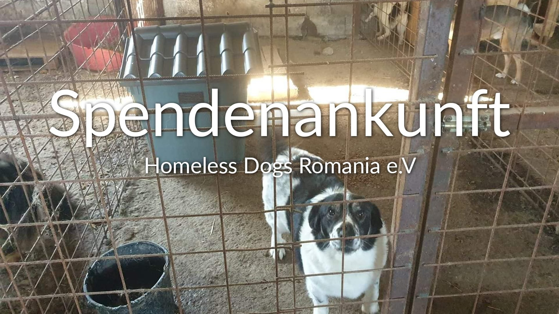 VIDEO_Homeless Dogs Romania e.V._Spendenankunft_SOS Hilferuf aus Rumänien_Rumänien
