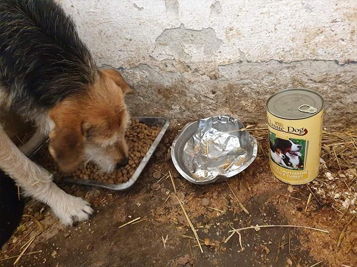Homeless Dogs Romania e.V.-Futterspendenankunft-november 2019-Aktion SOS Hilferuf Rumänien-Rumänien (1)