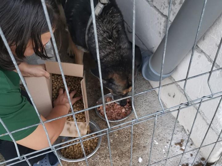 Tierschutz-Werkstatt e.V.-Futterspendenankunft-november 2019-Aktion SOS Hilferuf Rumänien-Rumänien (3)