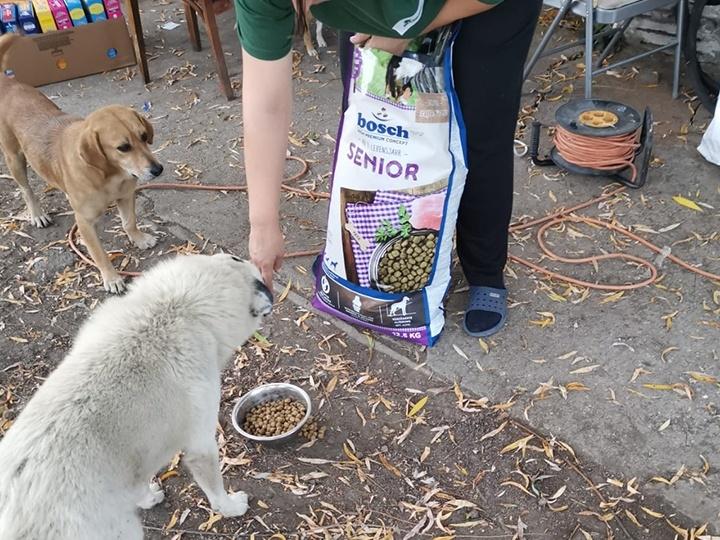 Tierschutz-Werkstatt e.V.-Futterspendenankunft-november 2019-Aktion SOS Hilferuf Rumänien-Rumänien (4)
