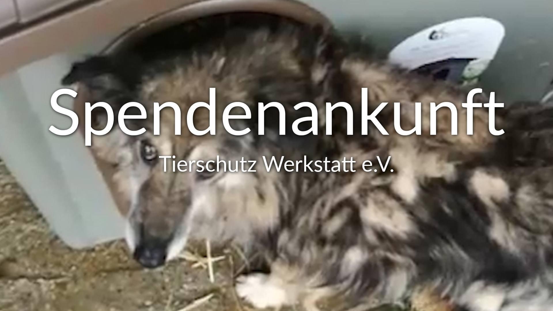 Tierschutz Werkstatt eV_1