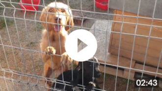 Tierschutz-Shop-Jahresrückblick-2019