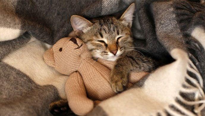 Entspannte Katze trotz Silvester