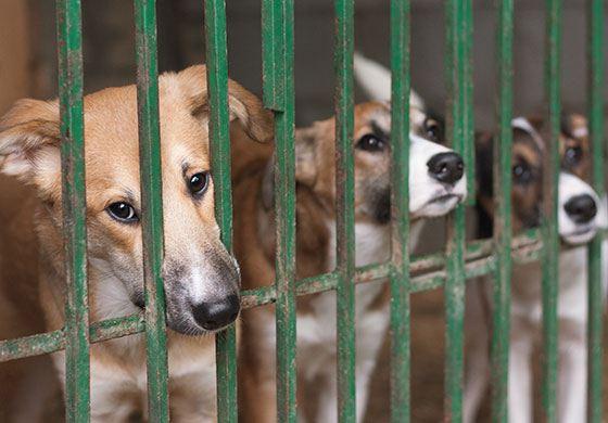 tiere-als-geschenke-drei-hunde-hinter-gittern-im-Tierheimzwinger