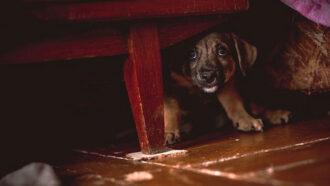 Tipps für entspanntes Silviester mit Hund und Katze