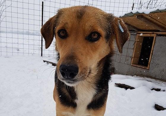 Tierheimhund im Schnee