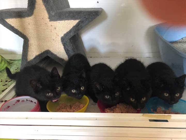 Katzen in Not e.V. -Futterspendenankunft-januar-2020-WL-Deutschland (3)