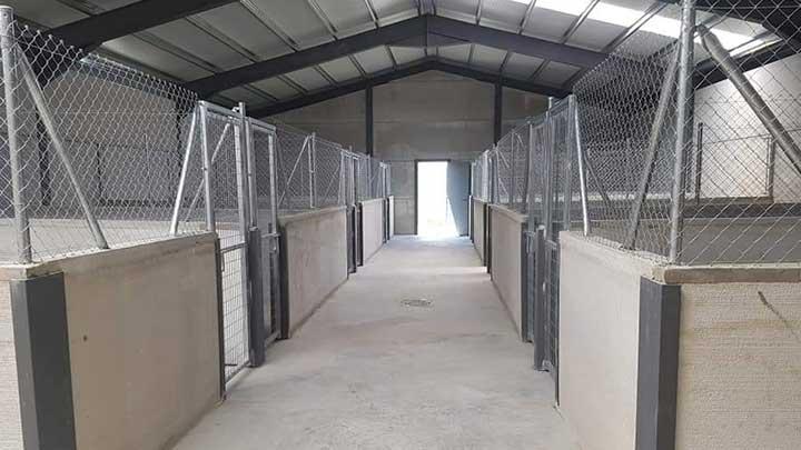langer Gang mit neugebauten Hundezwingern in Tierheim