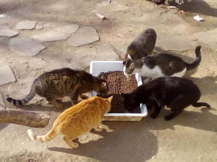 Animal Hope Romania e.V.-Futterspendenankunft-februar-2020-WL-Rumänien (1)