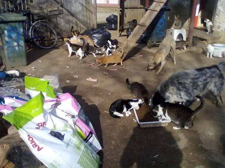 Animal Hope Romania e.V.-Futterspendenankunft-februar-2020-WL-Rumänien (3)