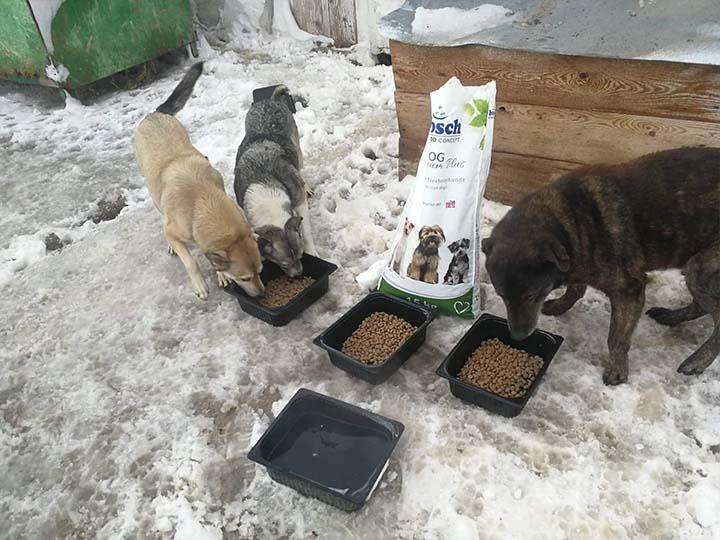 Engel der Hunde e.V.-Futterspendenankunft-februar-2020-WL-Rumänien (1)