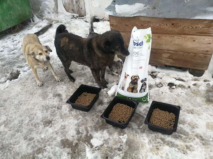 Engel der Hunde e.V.-Futterspendenankunft-februar-2020-WL-Rumänien (2)