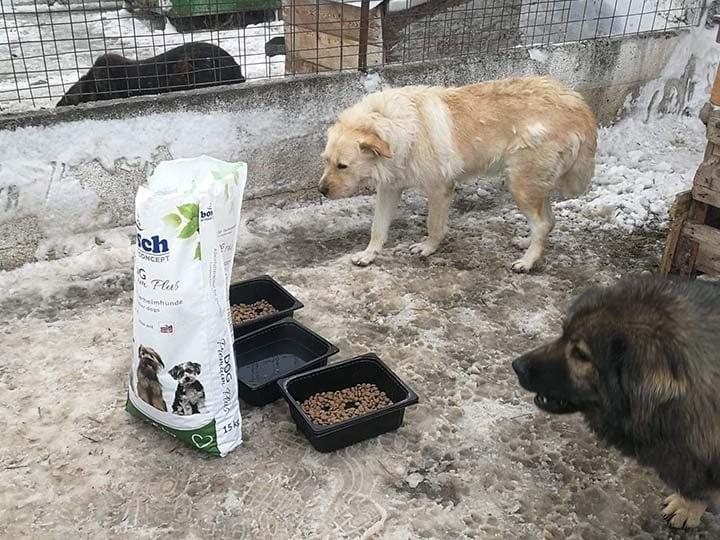 Engel der Hunde e.V.-Futterspendenankunft-februar-2020-WL-Rumänien (3)