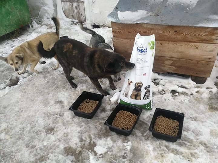 Engel der Hunde e.V.-Futterspendenankunft-februar-2020-WL-Rumänien (4)