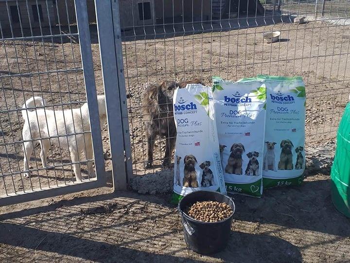 Animal Hope & Liberty e.V.-Futterspendenankunft-maerz-2020-Spenden-Marathon-2019-Rumänien (1)
