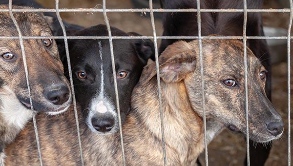 Corona-Hunde-im-Shelter