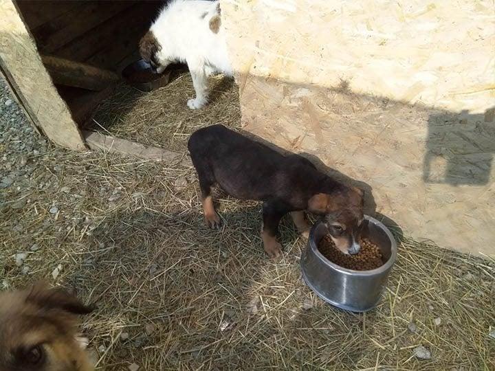 Freundeskreis der Straßenhunde in Campulung e.V.-Futterspendenankunft-maerz-2020-Spenden-Marathon-2019-Rumänien (2)