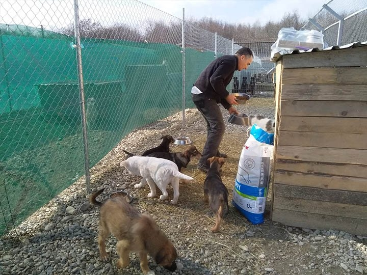 Freundeskreis der Straßenhunde in Campulung e.V.-Futterspendenankunft-maerz-2020-Spenden-Marathon-2019-Rumänien (3)