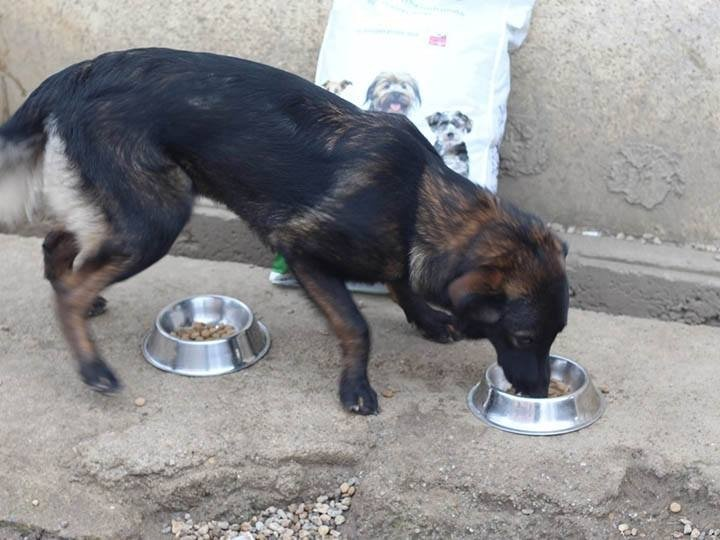 Grenzenlose Notfelle e.V.-Futterspendenankunft-maerz-2020-Spenden-Marathon-2019-Rumänien (2)