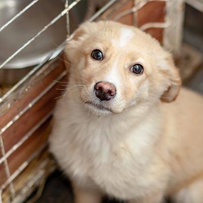 Hund-im-Shelter-Corona