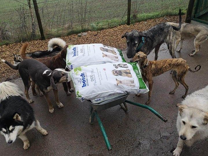 Pfotenhilfe Sauerland -Futterspendenankunft-maerz-2020-WL-Deutschland (2)