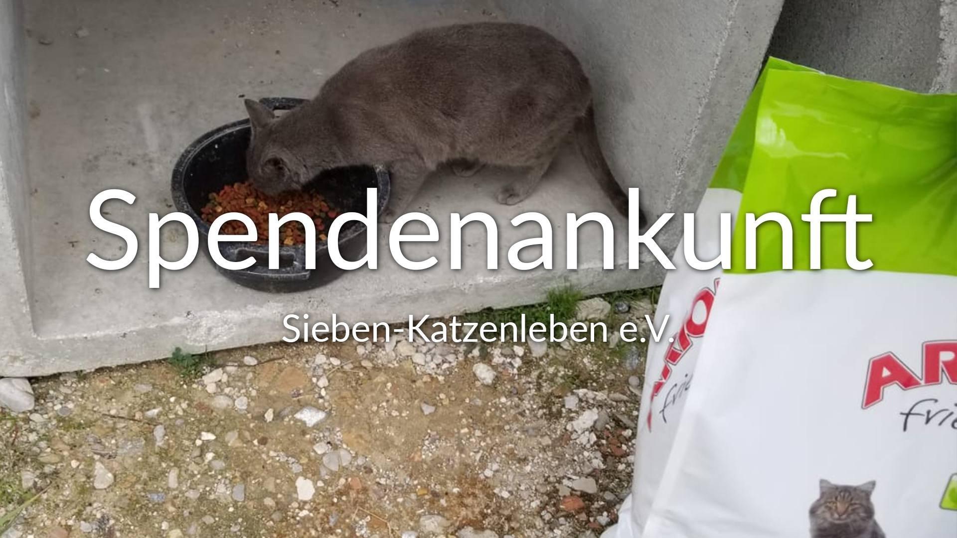 Sieben_Katzenleben_SM_2019_Thumbnail
