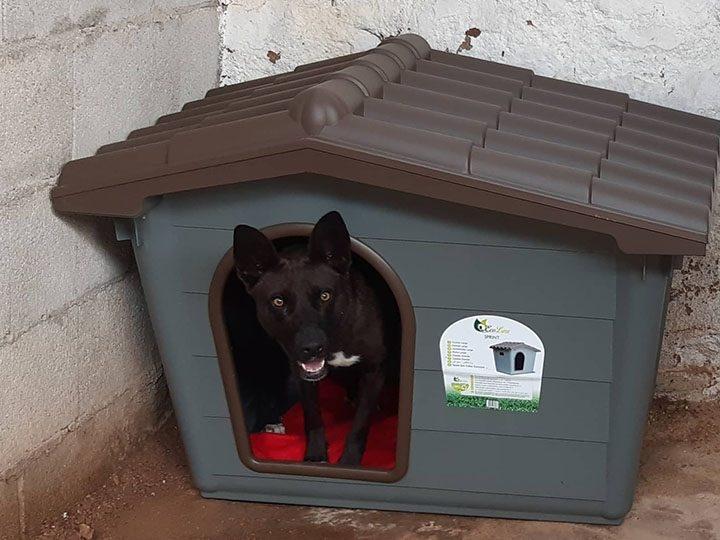 pro Hund andaluz e.V.-Futterspendenankunft-maerz-2020-Spenden-Marathon-2019-Spanien(1)