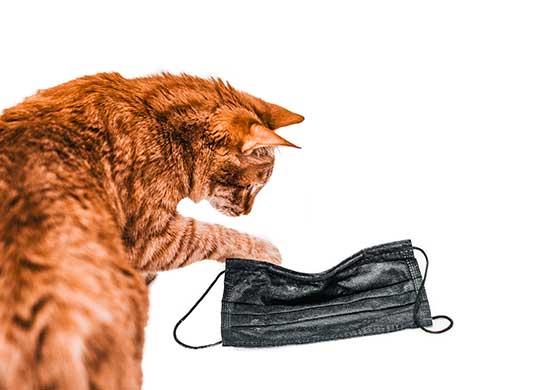 Eine Katze spielt mit einem Mundschutz