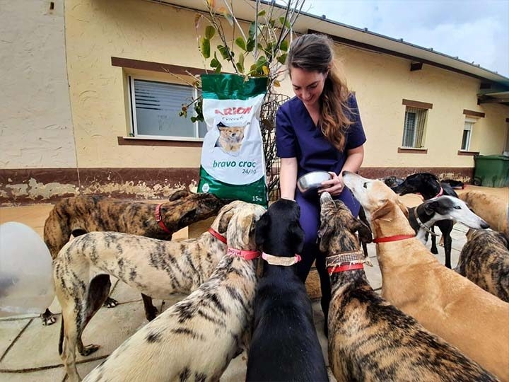 Galgorettung Fränkisches Seenland e.V.-Futterspendenankunft-april-2020-Galgo-Aktion-Spanien (1)