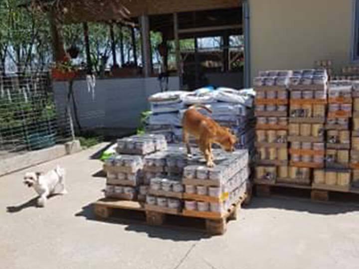 Pfote sucht Glück e.V.-Futterspendenankunft-april-2020-WL-Rumänien (4)