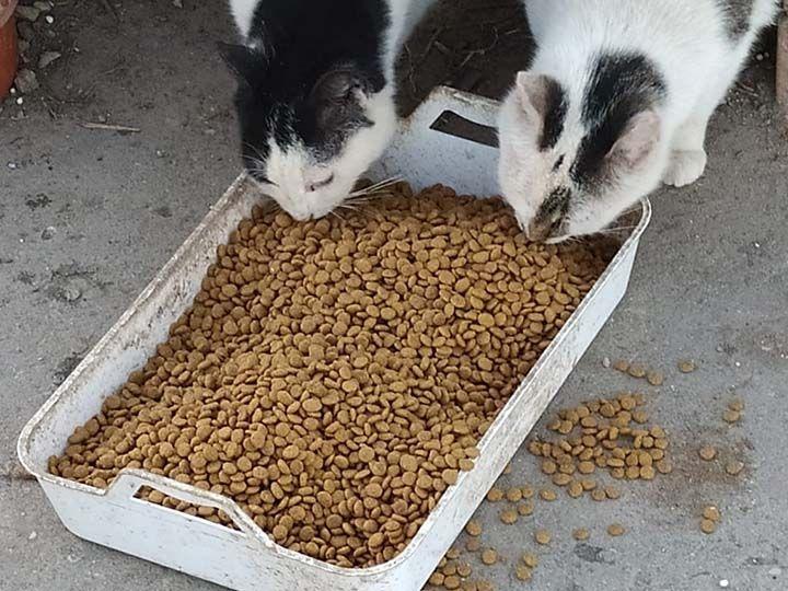 Sammelstelle für Tiere in Not e.V.-Notfallhilfe-Corona-Deutschland_3