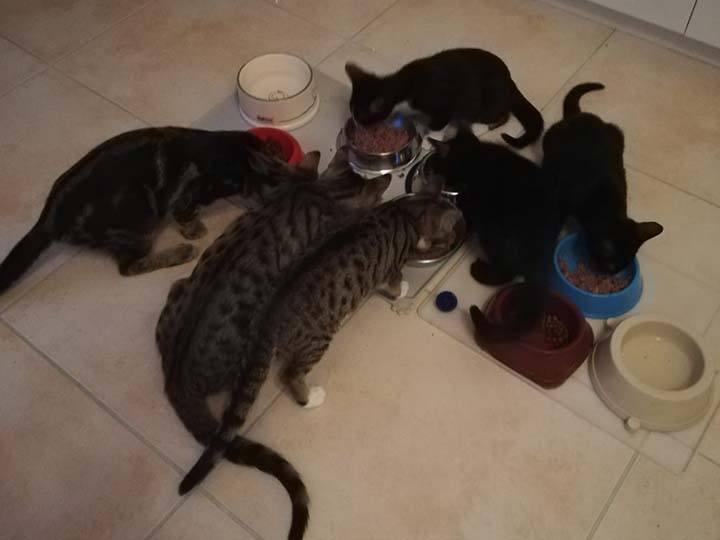 Sammelstelle für Tiere in Not e.V.-Notfallhilfe-Corona-Deutschland_4