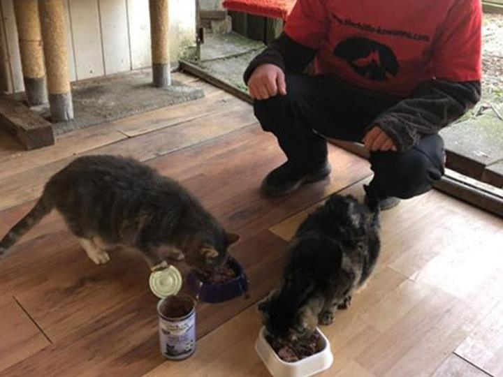 Tierhilfe KowaNeu e.V.-Futterspendenankunft-April-2020-Wunschliste-1