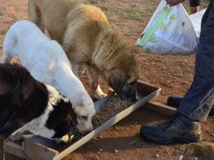 Verein für hilfebedürftige Tiere-Futterspendenankunft-april-2020-WL-Griechenland (1)