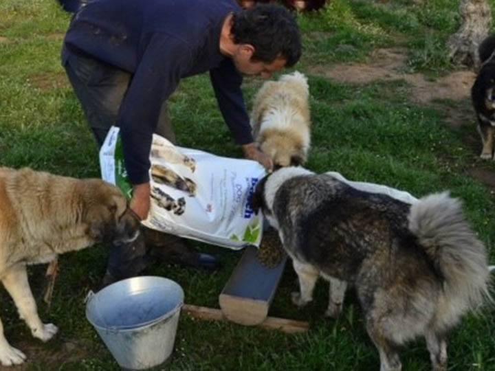 Verein für hilfebedürftige Tiere-Futterspendenankunft-april-2020-WL-Griechenland (2)