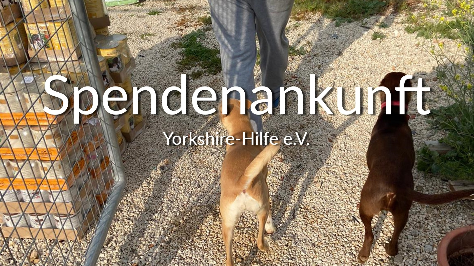 Yorkshire_Hilfe_eV_Corona_Thumbnail