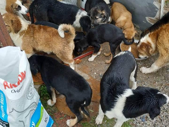 Zorro Dogsavior e.V.-Futterspendenankunft-april-2020-WL-Griechenland (1)