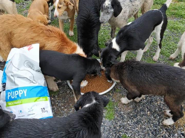 Zorro Dogsavior e.V.-Futterspendenankunft-april-2020-WL-Griechenland (2)