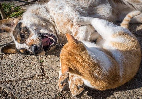 hund und katze spielen tipps gegen langeweile