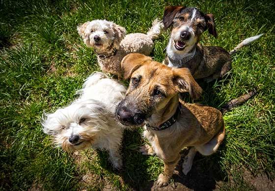 vier hunde sitzen auf wiese tipps gegen langeweile