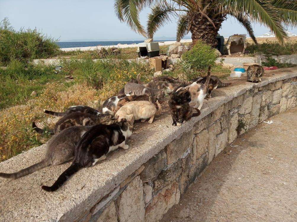 Glyfada Cats eV_Corona Nothilfe_GR_neu (2)