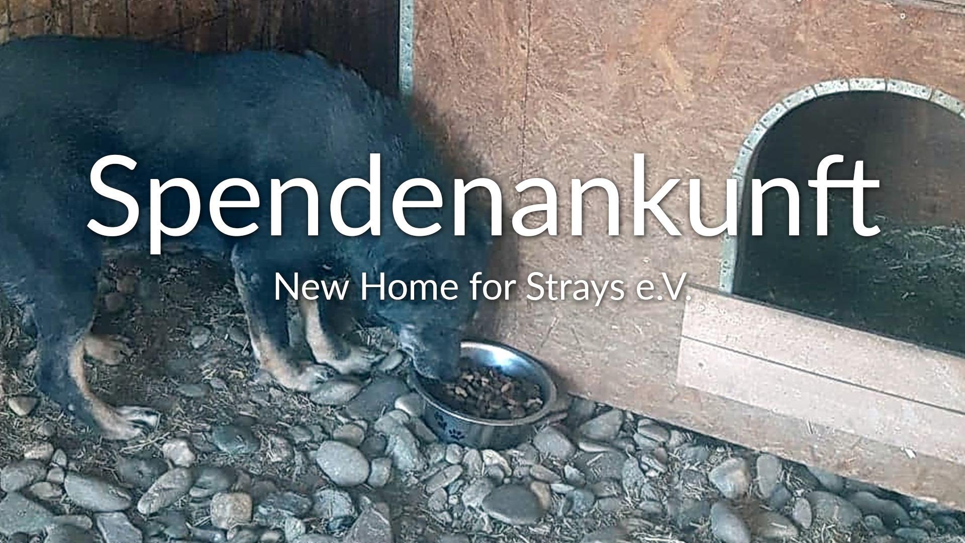 New Home for Strays eV_Futter_statt_Böller_RU