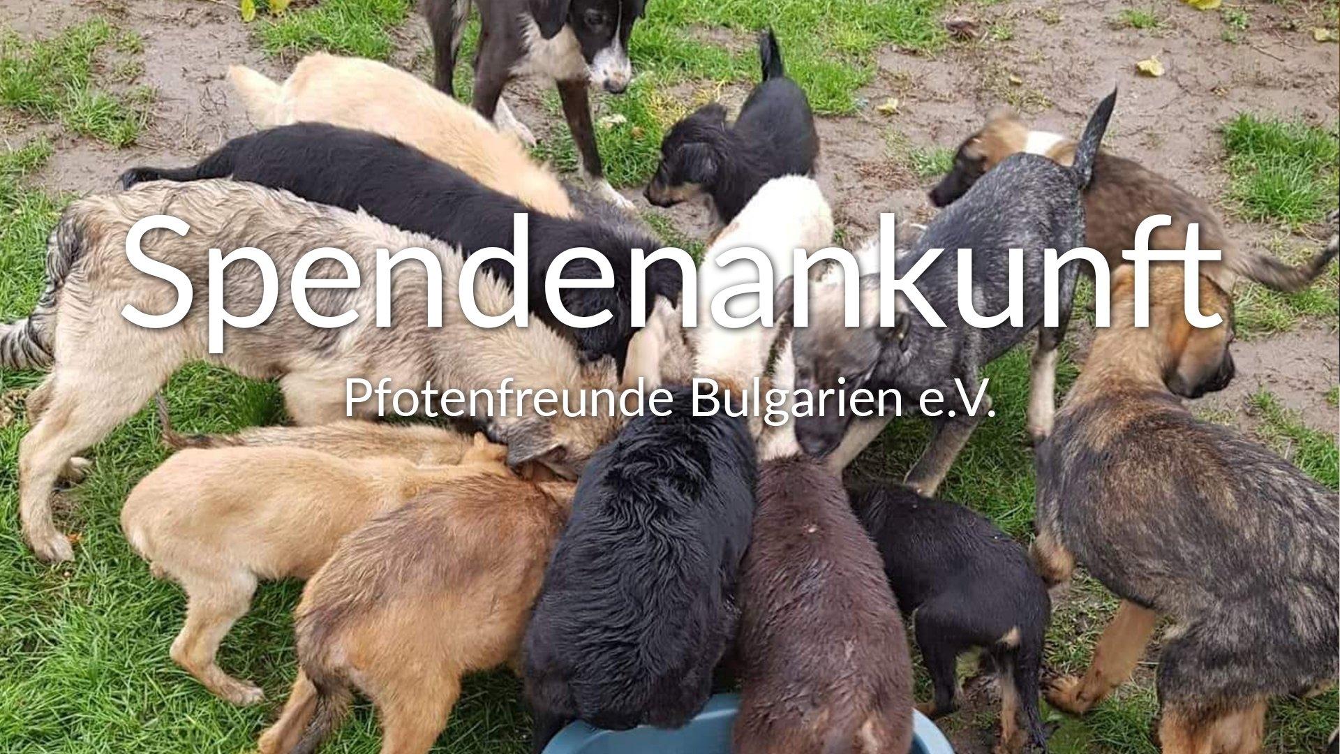 Pfotenfreunde Bulgarien e.V.-Futterspendenankunft-THdM Oktober-Bulgarien-VIDEO