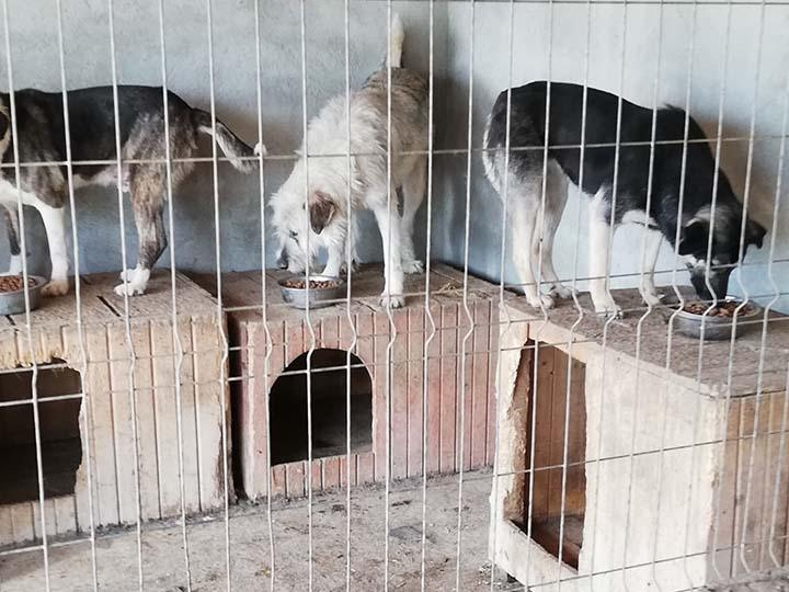 Sammelstelle für Tiere in Not e.V.-Notfallhilfe-Corona-Rumänien-1