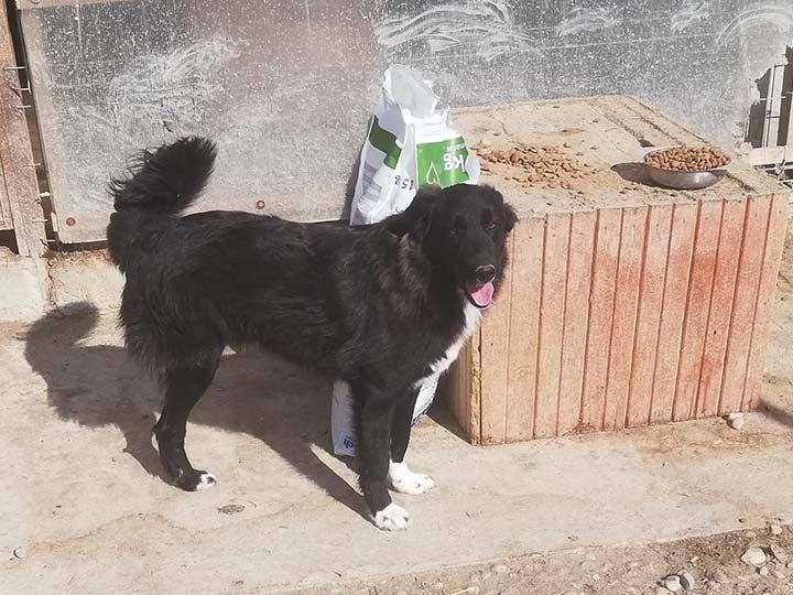 Sammelstelle für Tiere in Not e.V.-Notfallhilfe-Corona-Rumänien-4